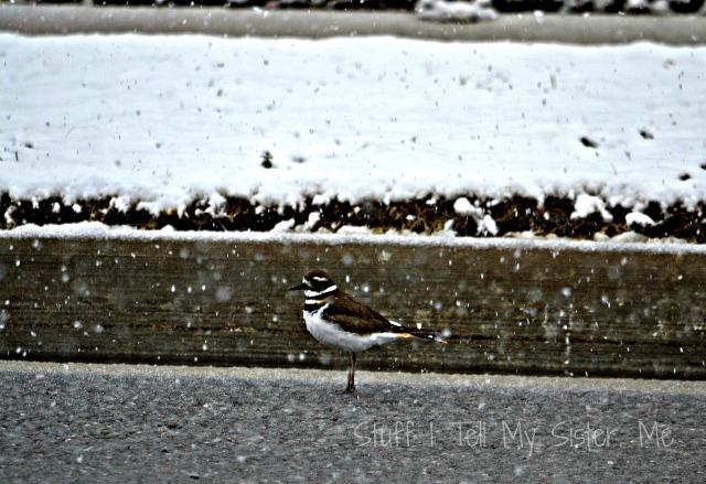 snow in feb 014