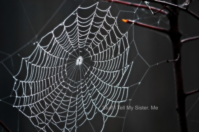 spider webs, indian blankets 1