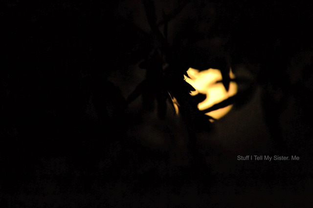 Super Moon behind the trees