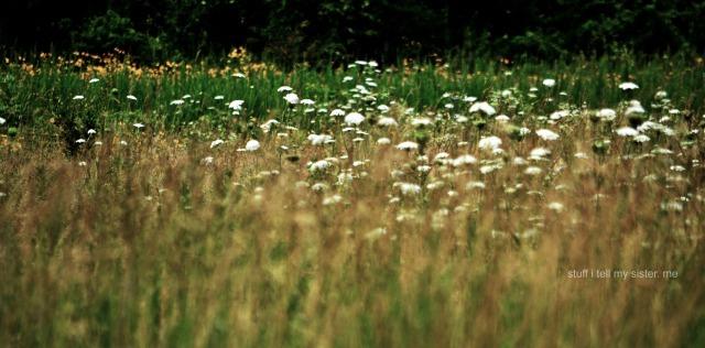 June wild flowers