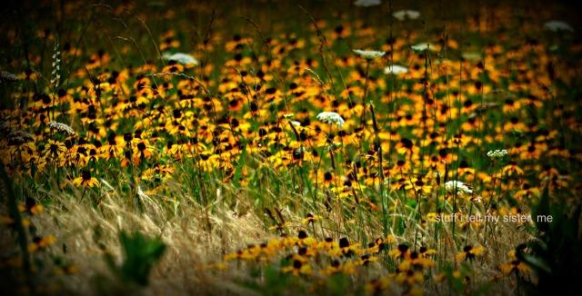 June yellow flower field