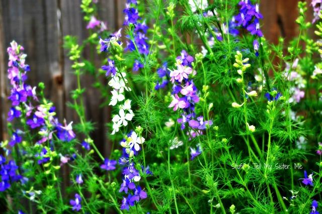 welcome june flowers