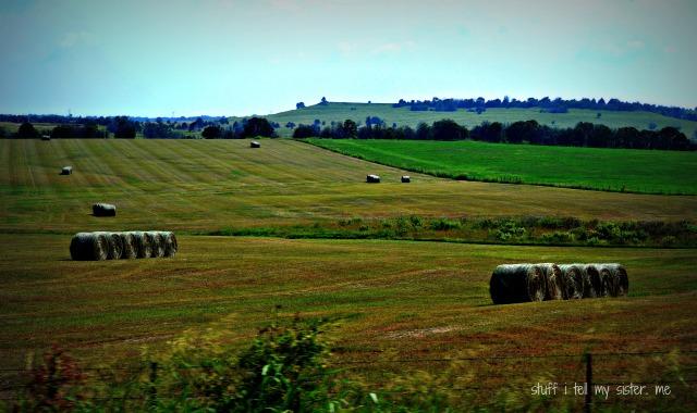 stillwater hayfield