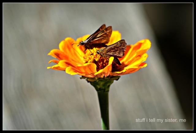 fall vacation flowers butterflies