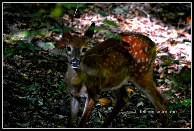 fall vacation flowers fawn 2