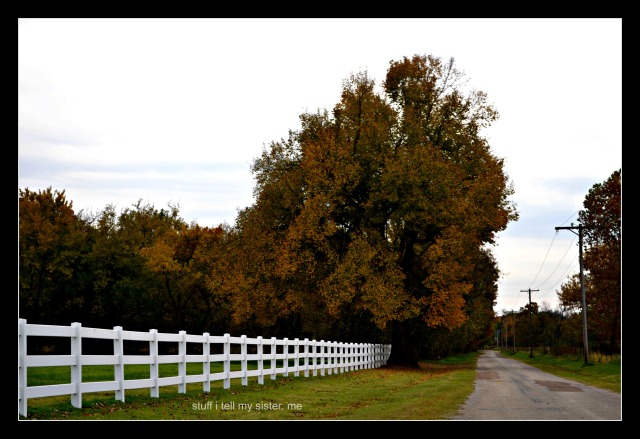 drive white fencetree