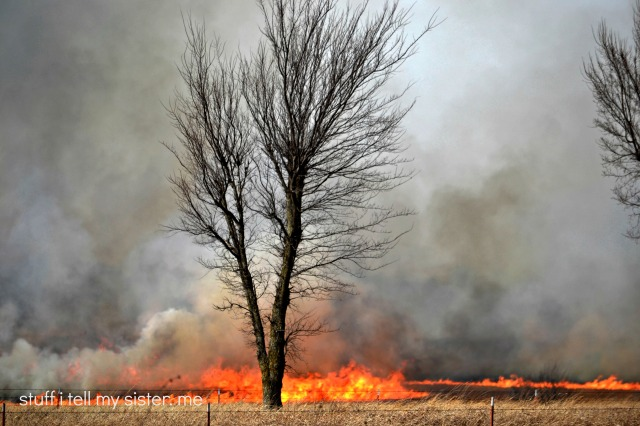 fire west of vinita 006 tree