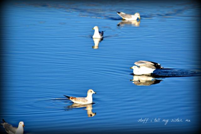 Sunday photos ~ warm bird 2