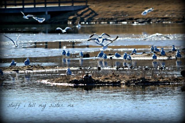 Sunday photos ~ warm Jan 029