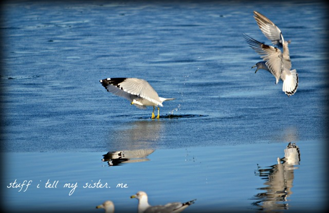 Sunday photos ~ warm Jan 049