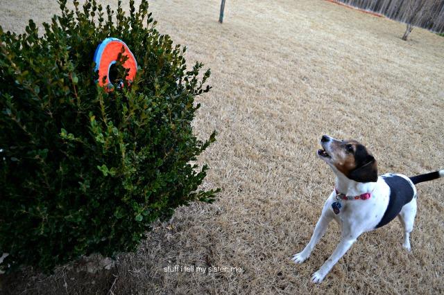 sugar frisbee