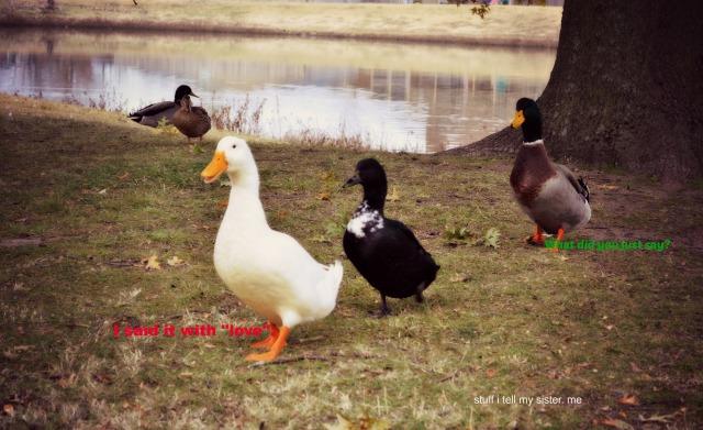 ducks of love