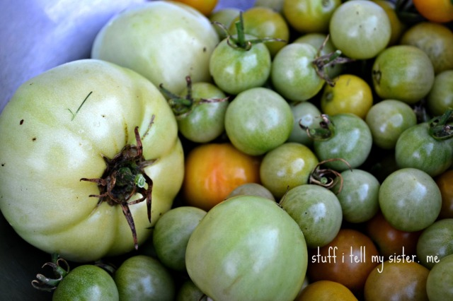 new tomatoes 008 maters