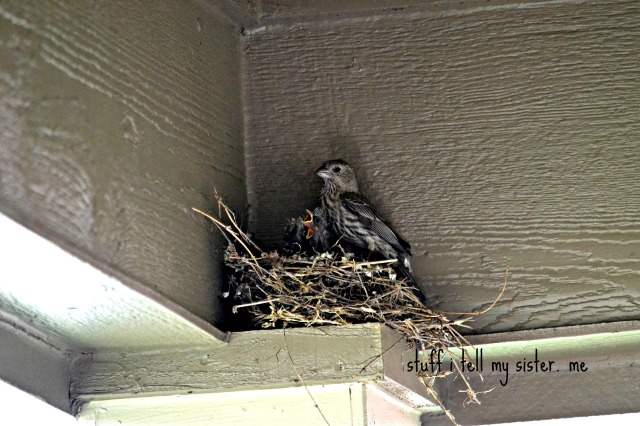 blooms birds mom and babies