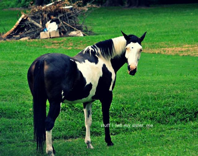 summer drive horse