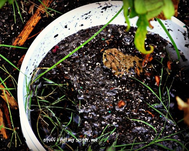 sugar frog edit bucket