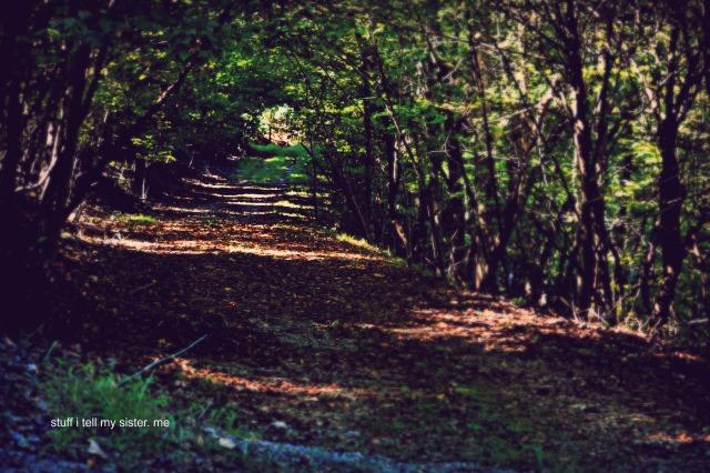arkansas tree road