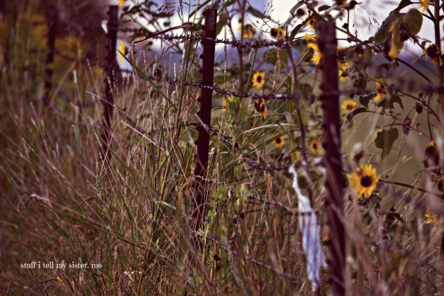 fall yellow weeds