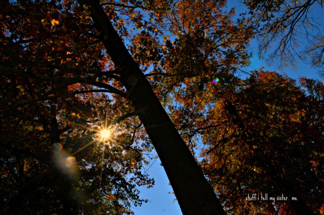 arkansas fall tree from ground
