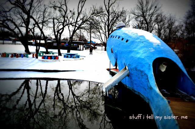 blue whale and snow 047