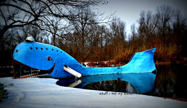 blue whale and snow entire